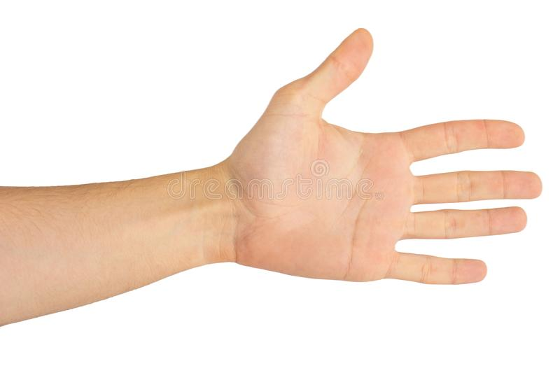 Palma della mano isolata su fondo bianco immagine stock