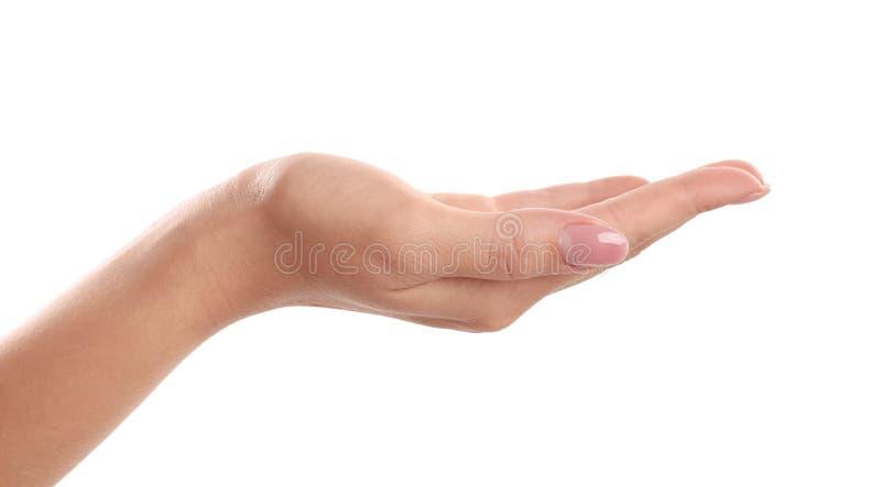 Palma della mano della tenuta della donna su su fondo bianco fotografia stock