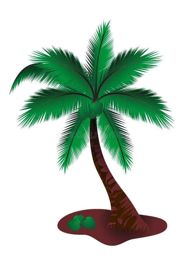 Palma della noce di cocco illustrazione vettoriale