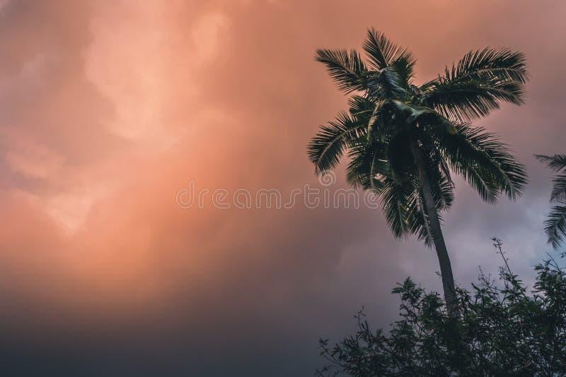 Palma della noce di cocco al tramonto fotografia stock libera da diritti