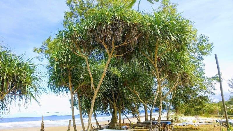 Palma della spiaggia fotografia stock