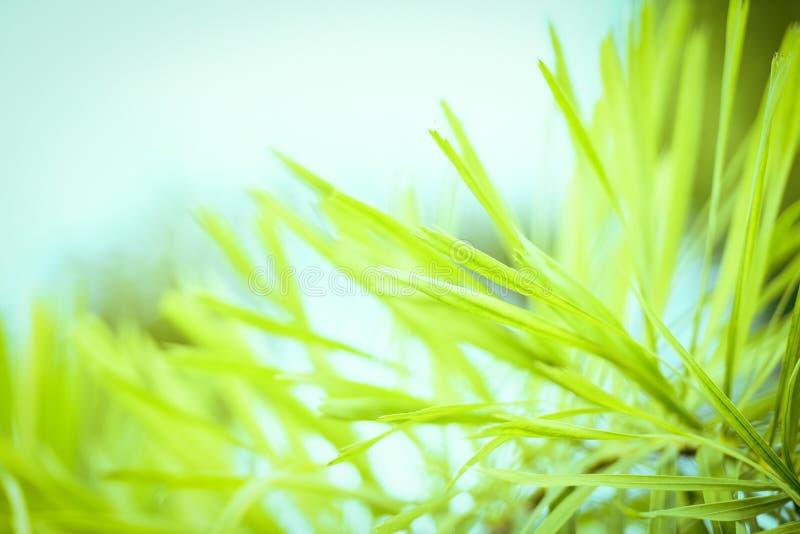 Palma delle foglie verdi nel parco del giardino della pianta tropicale fotografia stock libera da diritti