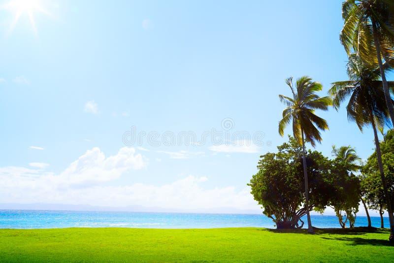 Palma di Art Coconut sul campo da golf tropicale sul mar dei Caraibi fotografia stock