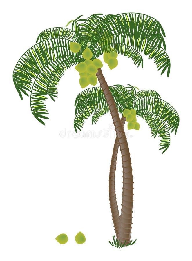 Palma di noce di cocco illustrazione vettoriale for Pianta di cocco