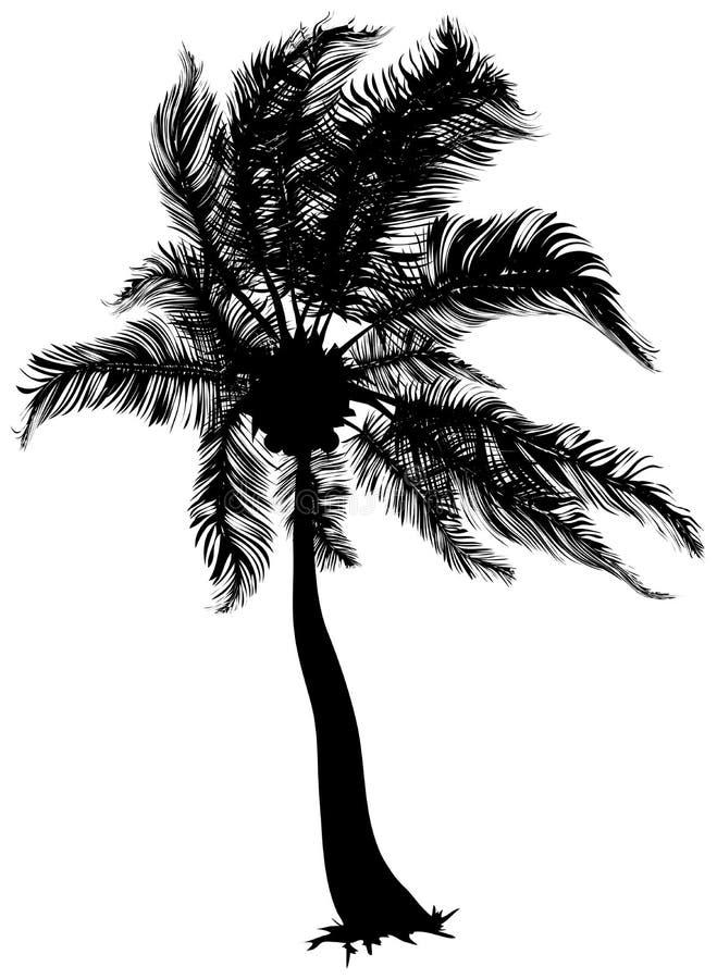 Palma di noce di cocco royalty illustrazione gratis