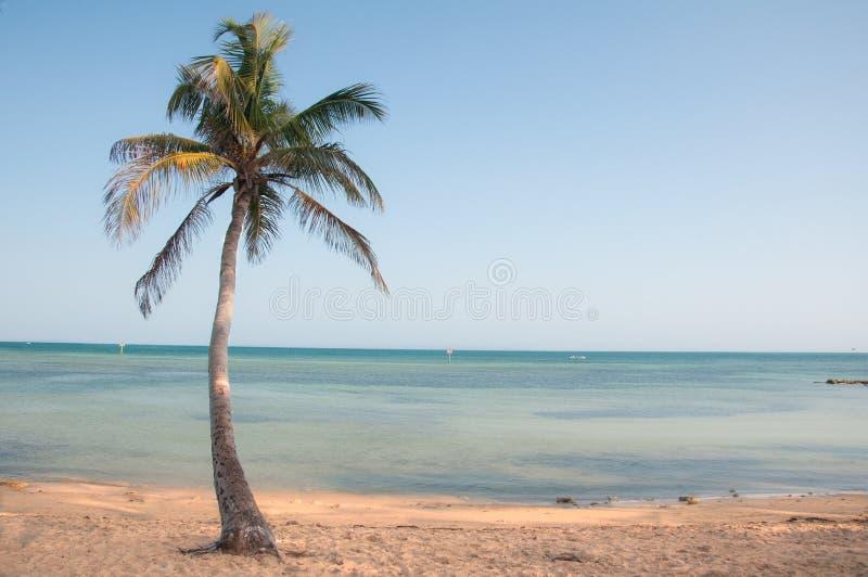 Palma di paradiso