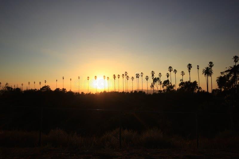 Palma di tramonto fotografia stock libera da diritti