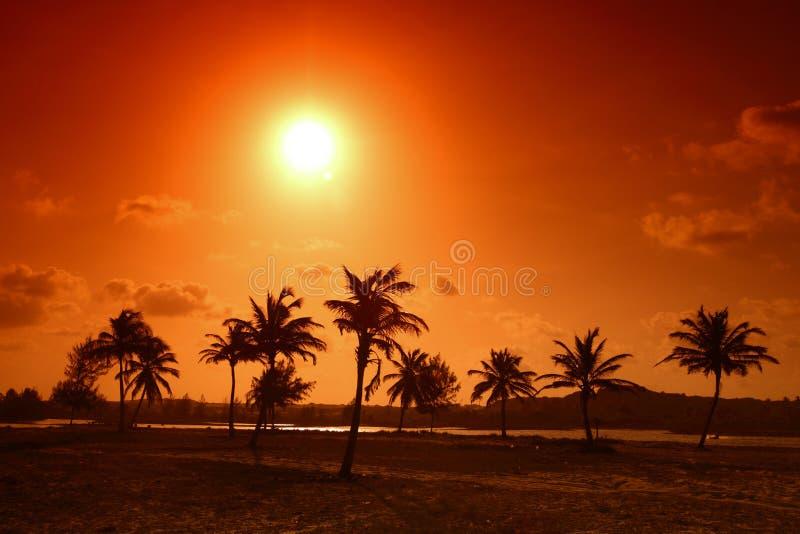 Palma do nascer do sol fotos de stock royalty free
