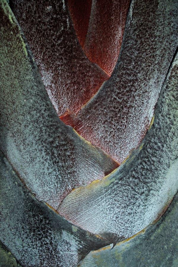 Palma do triângulo imagem de stock