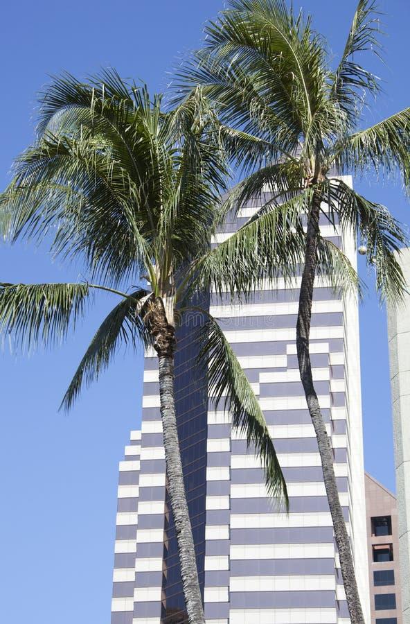 palma drapacz chmur zdjęcie royalty free