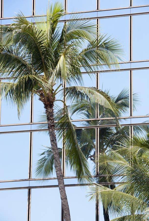 palma drapacz chmur zdjęcia stock