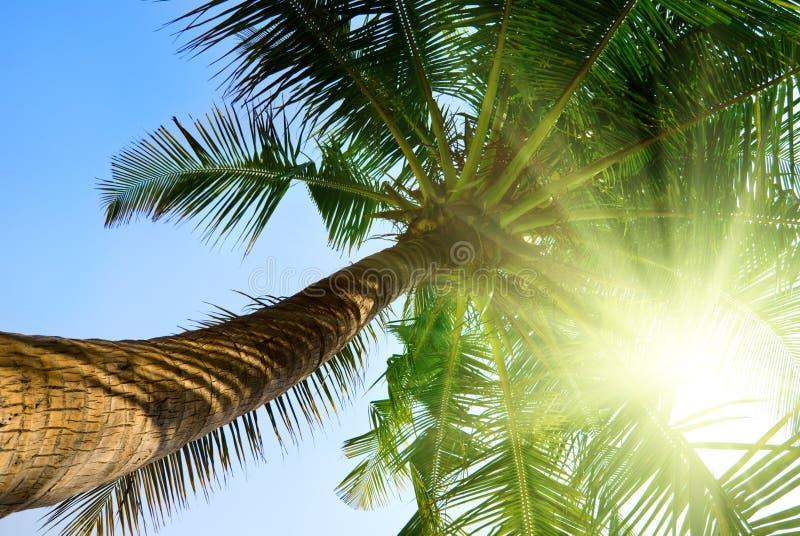 Palma e céu da manhã foto de stock