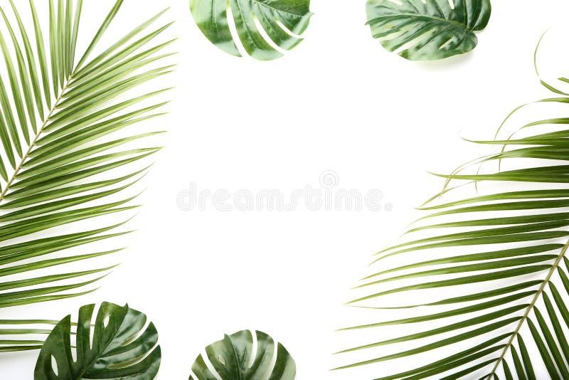 Palma e folha verdes do monstera fotos de stock royalty free