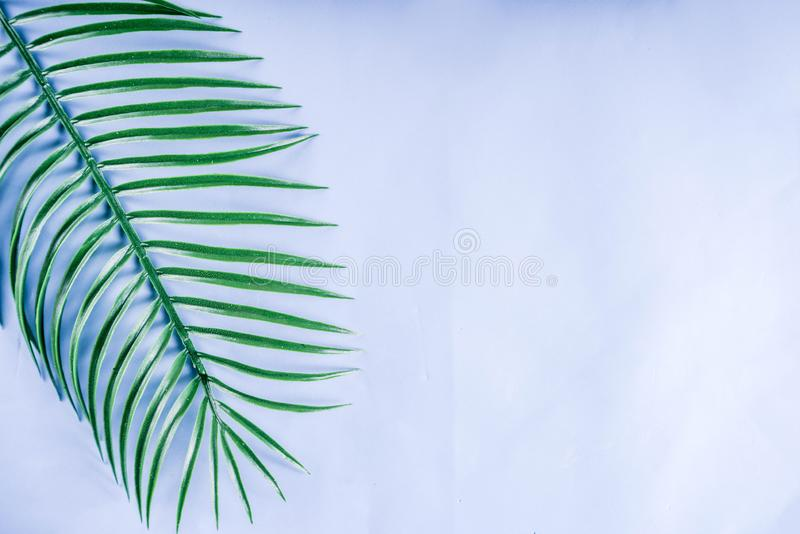 Palma e fundo tropicais das folhas do monstera fotos de stock royalty free