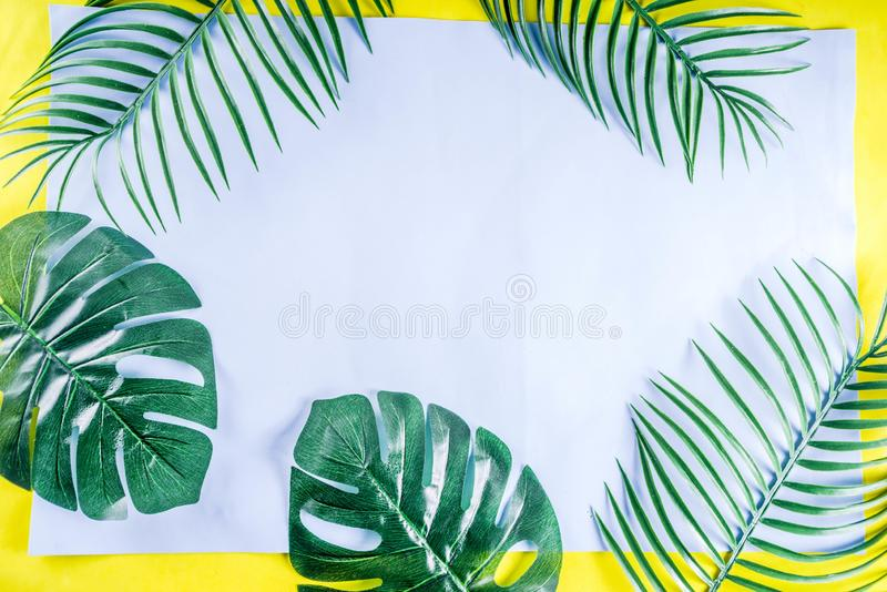 Palma e fundo tropicais das folhas do monstera fotografia de stock royalty free