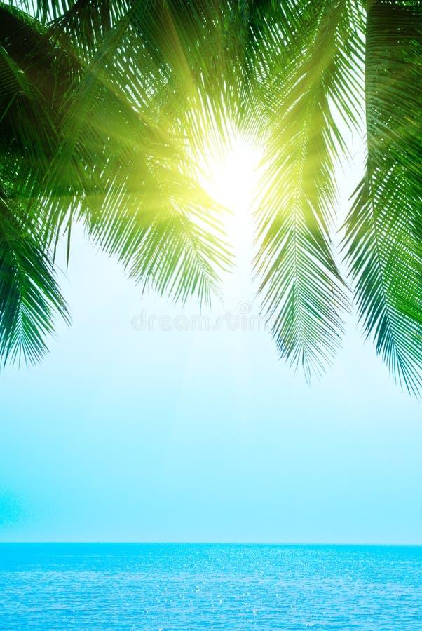 Palma e mare di mattina fotografie stock libere da diritti