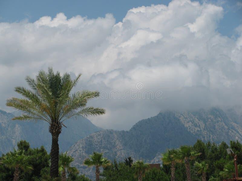 Palma e montanhas fotografia de stock royalty free