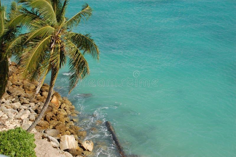 Palma e oceano em Nassau, Bahamas foto de stock