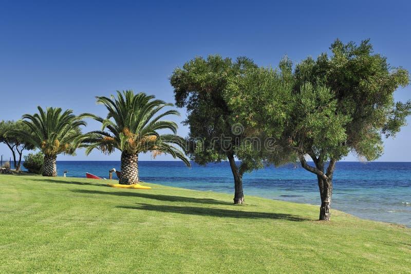 Palma e oliveiras fotografia de stock royalty free