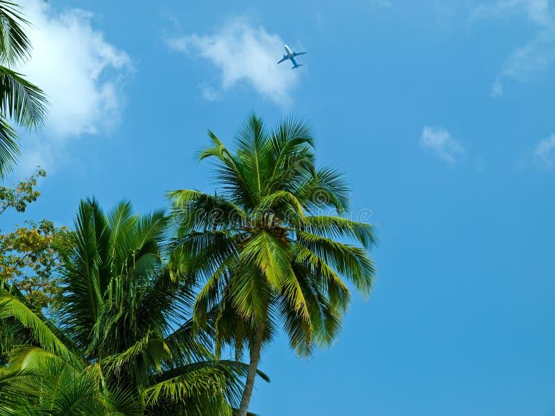 Download Palma e plano foto de stock. Imagem de exotic, verão - 12807550