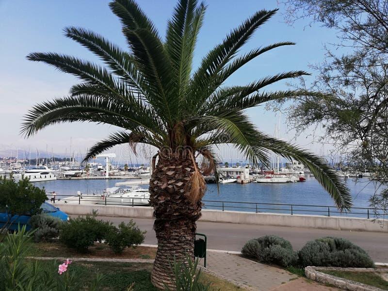 Palma e porto imagens de stock royalty free