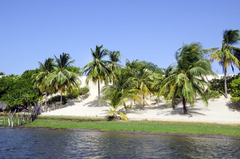 Palma e praia em Jericoacoara em Brasil fotos de stock