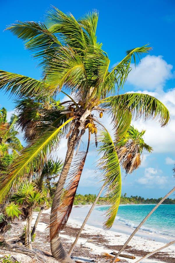 Palma e spiaggia immagini stock libere da diritti