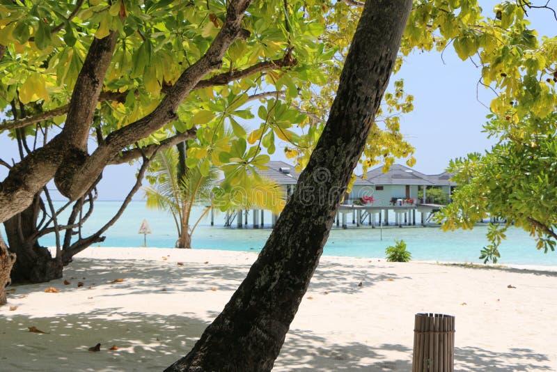 Palma ed alberi verdi sulla spiaggia sulle Maldive con waterbungoow fotografie stock