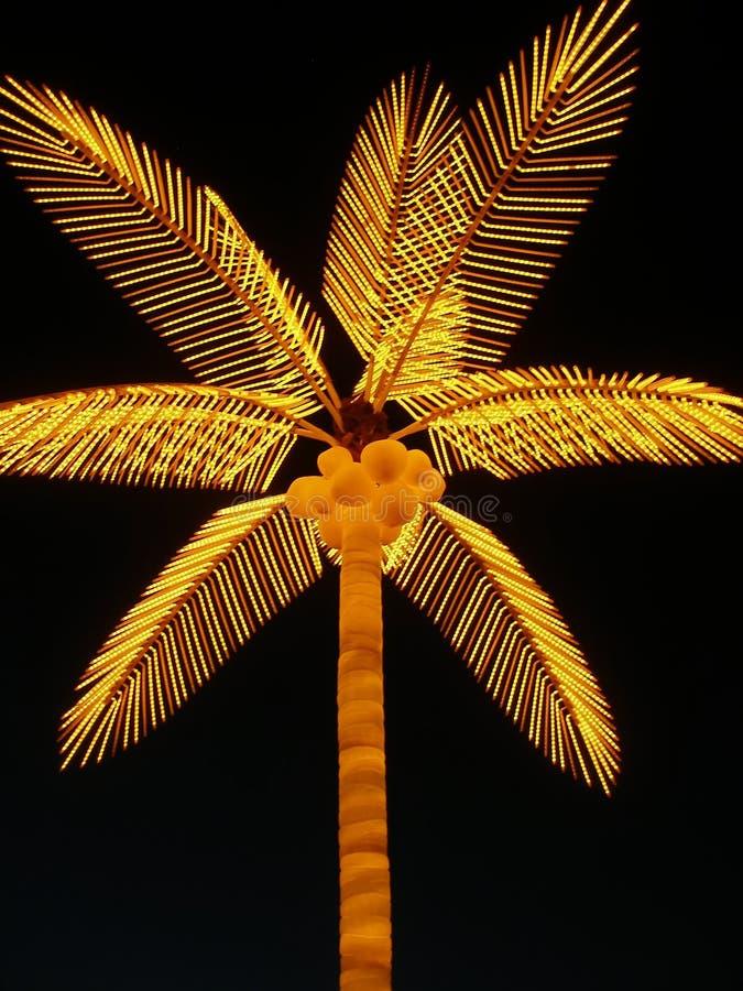 Palma elettrica luminosa fotografie stock libere da diritti