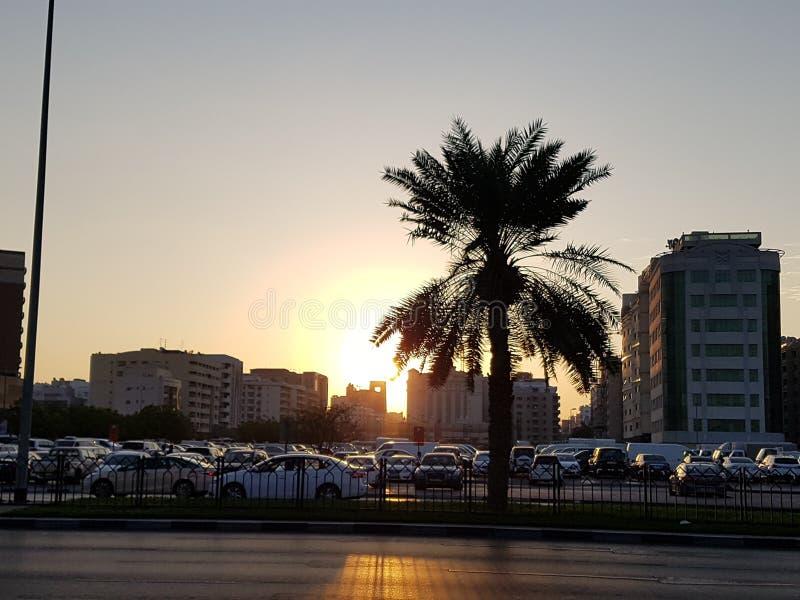 Palma em Dubai foto de stock royalty free