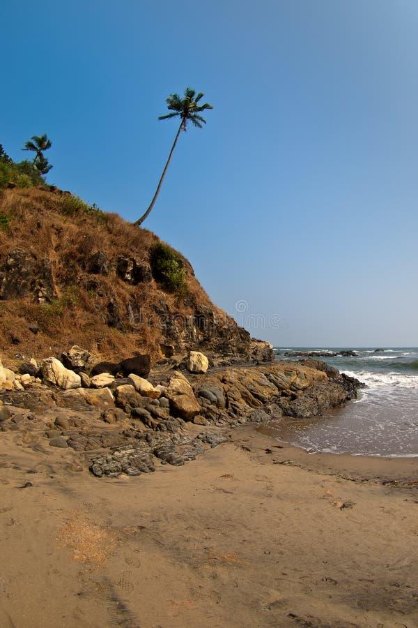 Download Palma em um monte foto de stock. Imagem de console, férias - 12807428