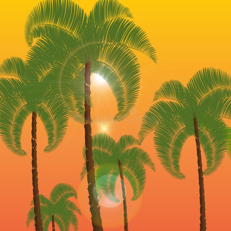 Palma en dos filas, una visión inferior Contra la perspectiva de puesta del sol anaranjada, salida del sol Ilustración ilustración del vector