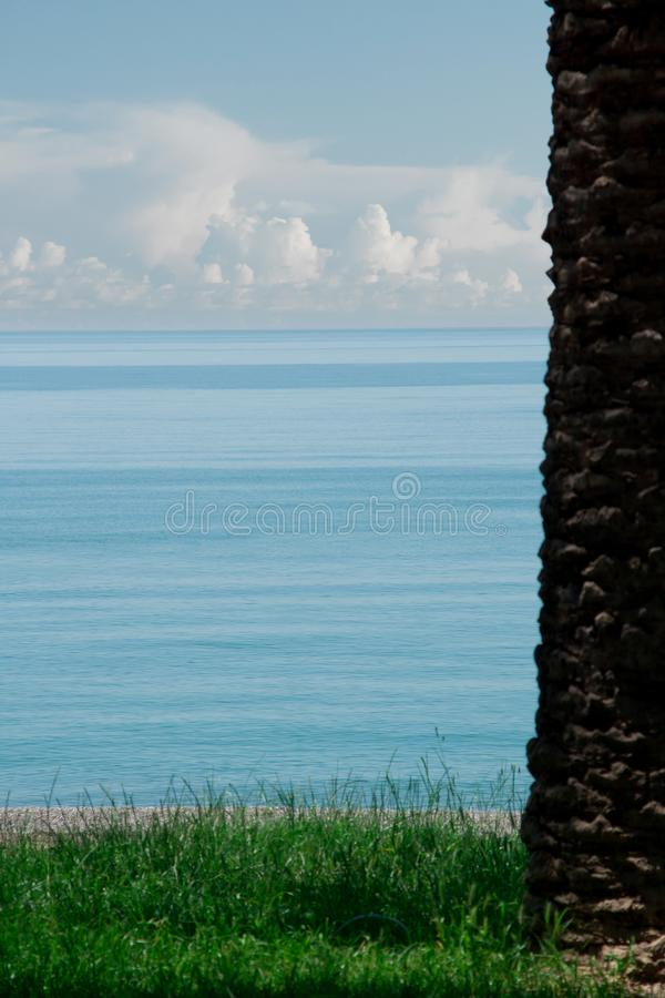 Palma en hierba y el mar imagen de archivo libre de regalías