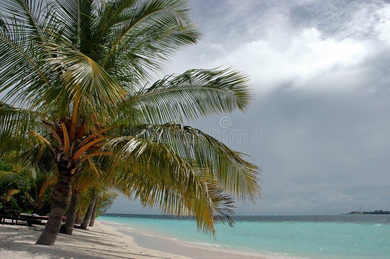 Palma en la isla fotografía de archivo