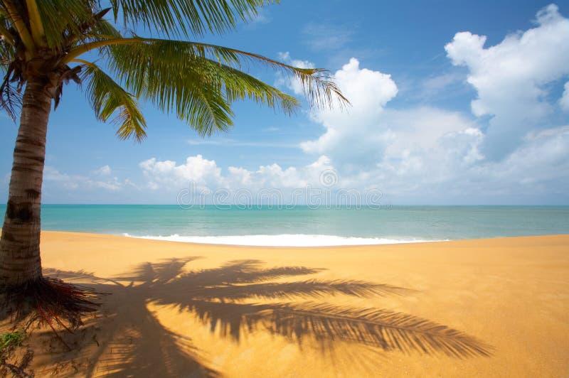 Palma en la playa