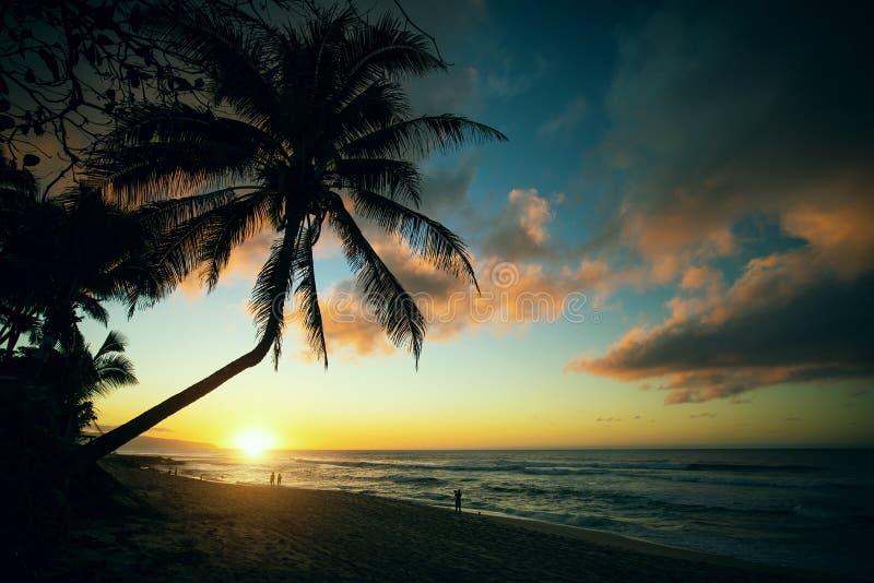 Palma en la playa de la puesta del sol de la orilla del norte de Oahu, Hawaii fotografía de archivo libre de regalías