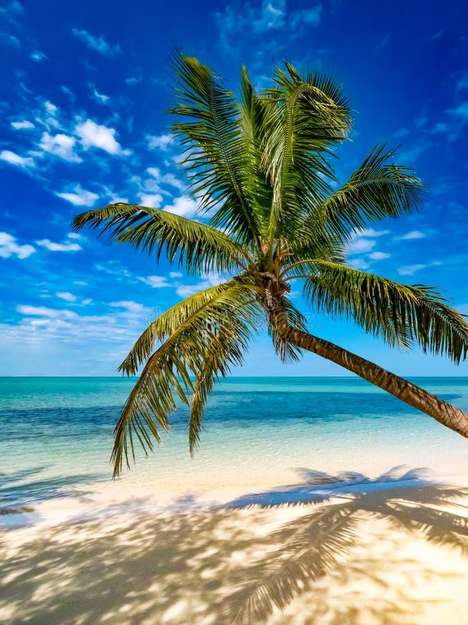 Palma en ?rbol en la playa tropical con el mar de la turquesa y la arena blanca foto de archivo libre de regalías