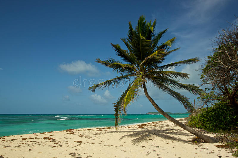 Palma escénica sobre la playa fotos de archivo libres de regalías