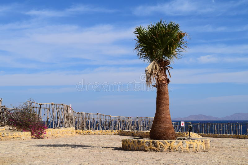 Palma et buisson fleurit sur un fond de ciel bleu photo stock
