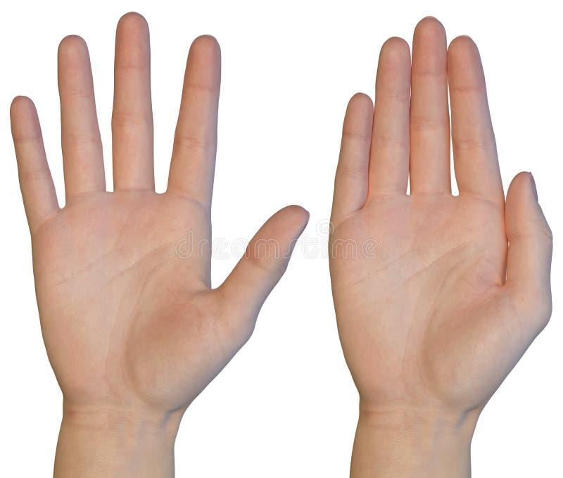 Palma femminile della mano immagine stock