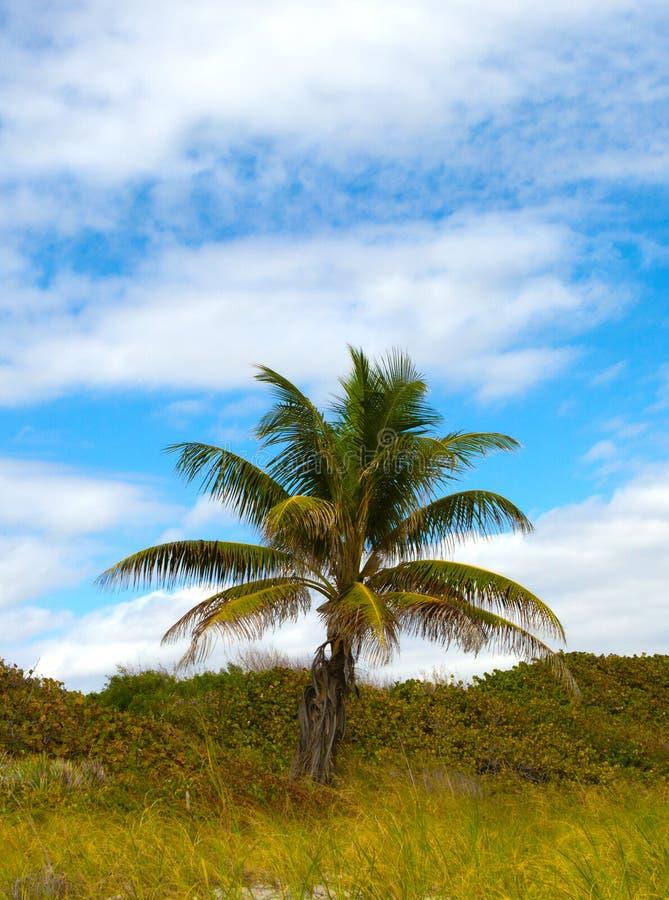 Palma in Florida fotografie stock