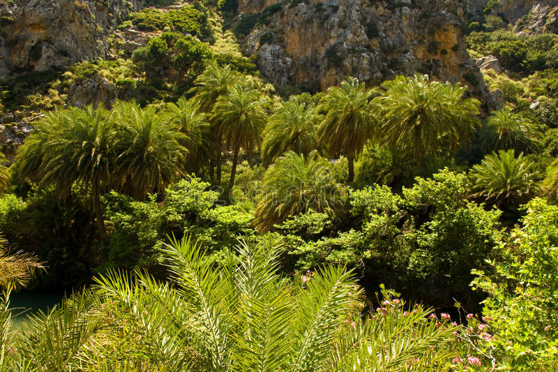 Palma Forrest fotografie stock