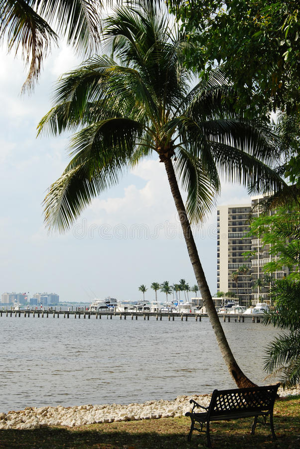 Palma in Fort Myers, Florida immagini stock libere da diritti