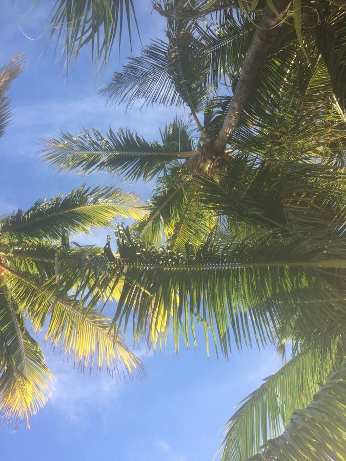 Palma Frawns e cielo blu fotografia stock libera da diritti