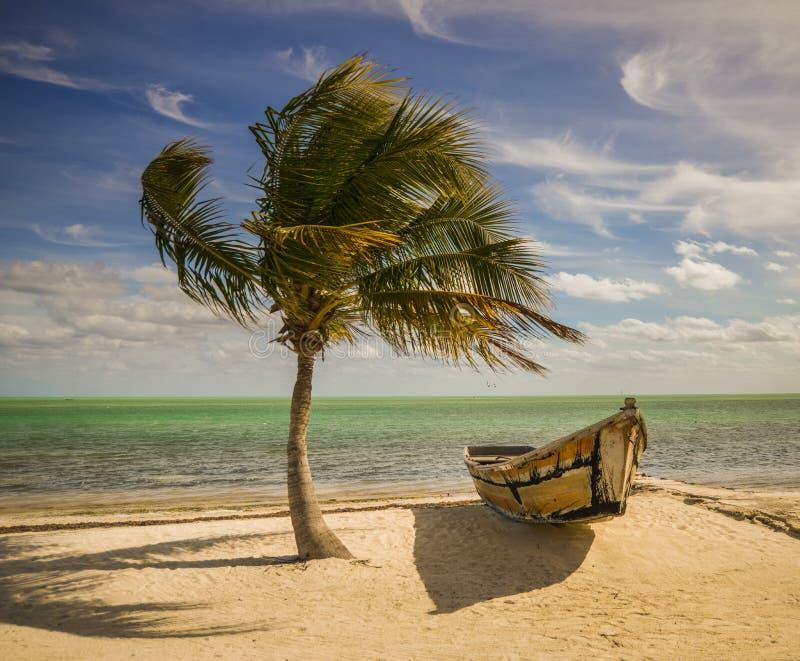 Palma i łódź obrazy royalty free