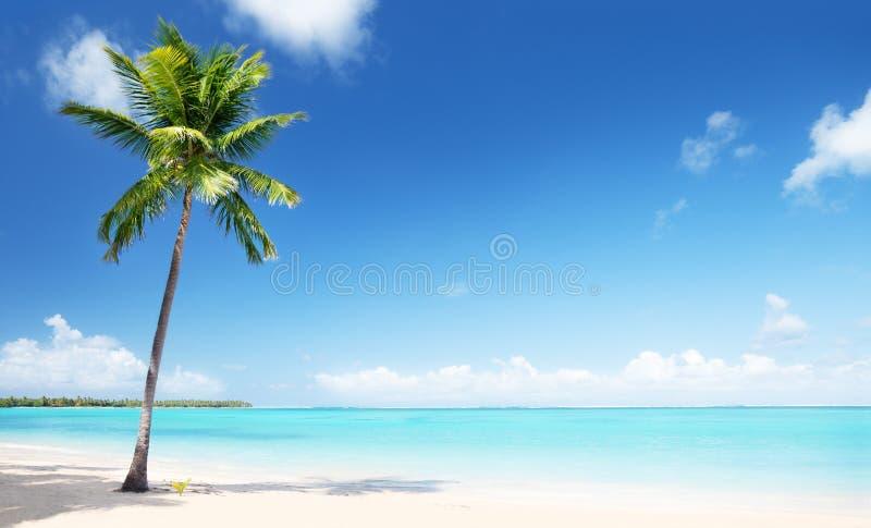 Palma i morze fotografia stock