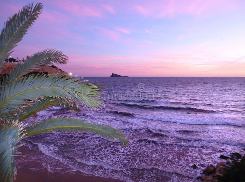 Palma i morze Benidorm Hiszpania fotografia stock