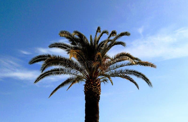 Palma i niebo obraz royalty free