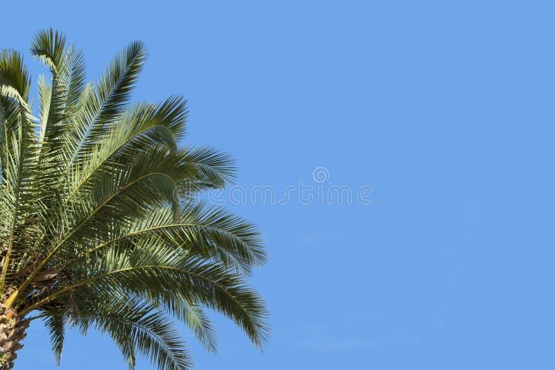 PALMA I niebo zdjęcia stock