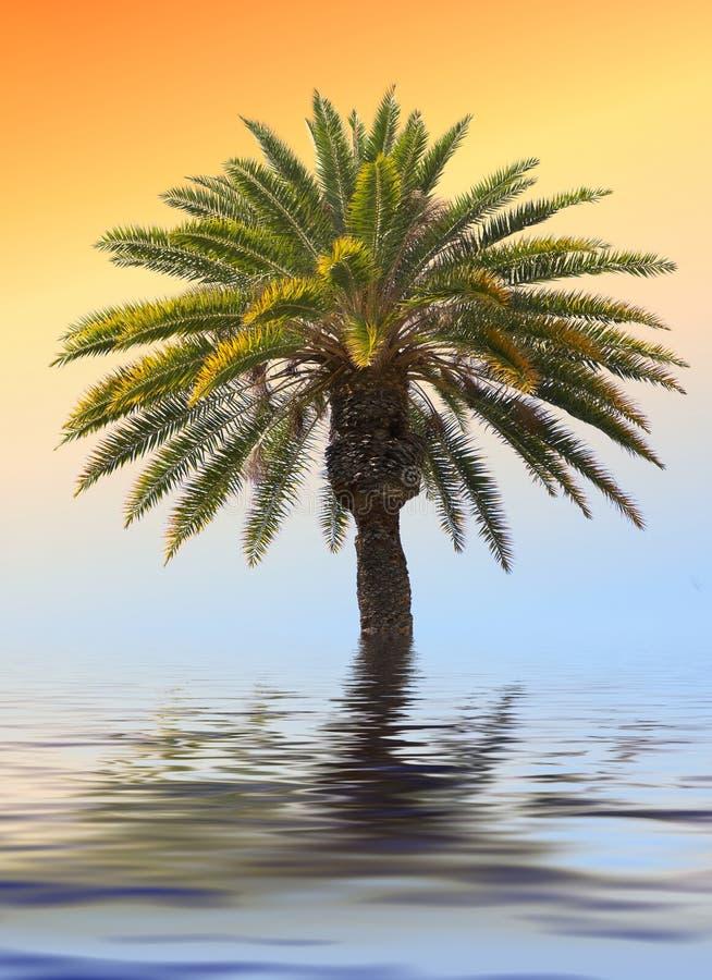 palma ikony zdjęcie royalty free